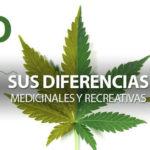 Lubricantes Eróticos con Compuestos de CBD del Cannabis, beneficiosos para la Salud.